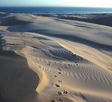 Stockton Bight Frontal Dunes by Bernadette Smith (c) by smithrankenART