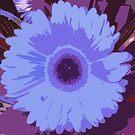 Blue gerbera by evapod