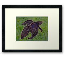 Siamese Fighting Fish Framed Print