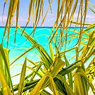 Paradise  by tracyleephoto