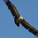 Flying Above Me by Pamela Jayne Smith
