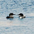Lovey Loony Loons by zachdier