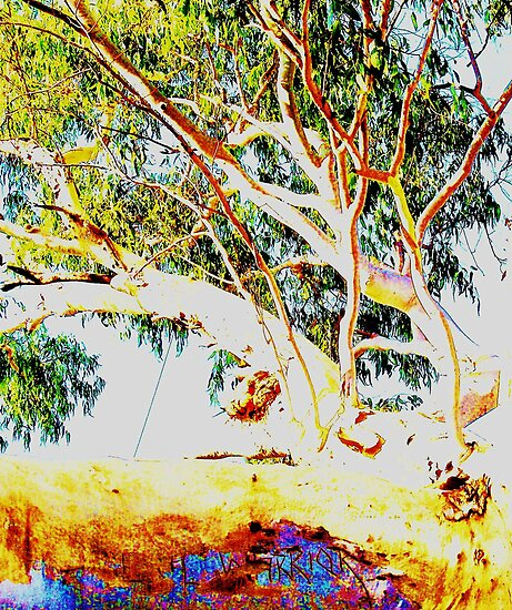 Gum Tree Warrior by Sharon Davey