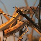 Rat Snake by IanPharesPhoto