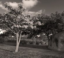 Landscape in Vieques, Puerto Rico by John Rodriguez
