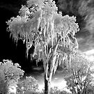 Infrared Tree by dbschanck