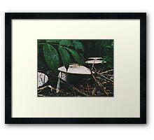 Forest Floor. Framed Print