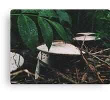 Forest Floor. Canvas Print