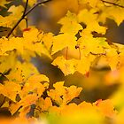 Fall Colors by Eric Abernethy