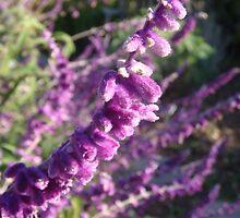 Purple Pleasures by Catherine Mardix