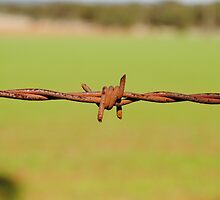 Rusty Barbed Wire Fence by purpletanya