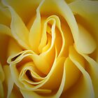 Yellow Rose by simpsonvisuals