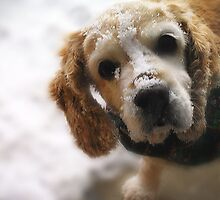 Playtime in the Snow by Stacy Layman