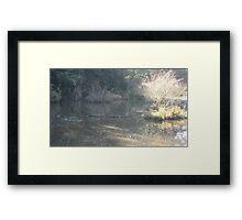 A golden Spring 1 Framed Print