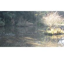 A golden Spring 1 Photographic Print
