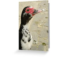 Muscovy Portrait Greeting Card
