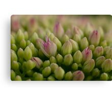 Green & Pink Canvas Print