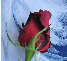 Not Just Another Red Rose by Adri Turner