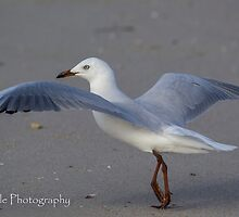 Gull Dance by Rick Playle