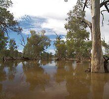 Roe Creek,Central Australia. by Lisa Evans