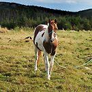 Gentle Pony by Jennifer Finn