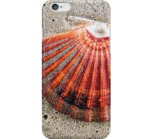 Scallop Shell iPhone Case/Skin