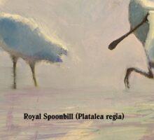 Birds of Australia - Royal Spoonbill (Platalea regia) Sticker