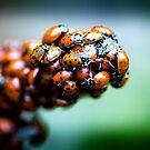 Ladybug Sanctuary by Andrew Moore