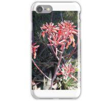 Aloe Vera in bloom iPhone Case/Skin