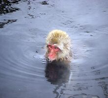Monkey Swims in Onsen by Natalie Buxton