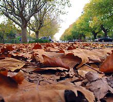 Autumn in Williamstown by Natalie Buxton