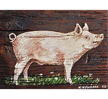 Hog Photographic Print