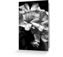 Soft Flowers - Black & White Greeting Card
