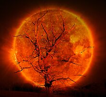 Burning Tree (Challenge entry UA) by sunshine0