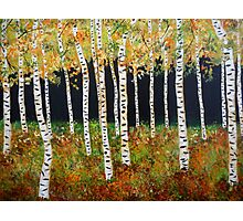 Ready for Change Colorado Aspen Tree Painting Photographic Print