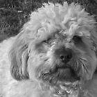 My dog by MatrixMan