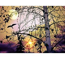 Aspen Moon Photographic Print