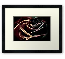 A Rose of Two Colours Framed Print