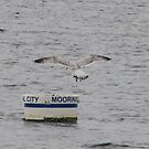 New London, CT: Cleared for Landing by ACImaging