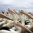 Pelican Parade by chasingsooz