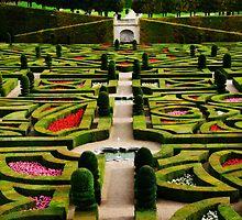 Jardin d'Amour - Villandry by Alison Cornford-Matheson