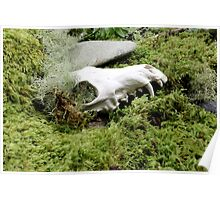 Amonngst the moss Poster