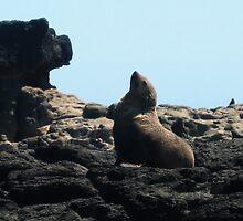 Posing Seal by Cheryl Parkes