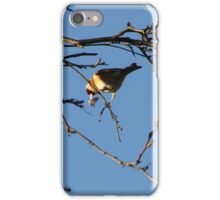 Goldfinch collecting nesting material iPhone Case/Skin