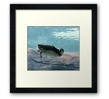 Is that a fly? Framed Print