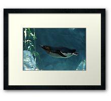 Swim Penguin Framed Print