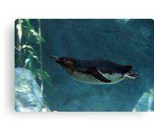 Swim Penguin Canvas Print