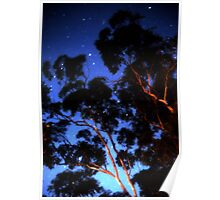 Star trails & eucalypts Poster