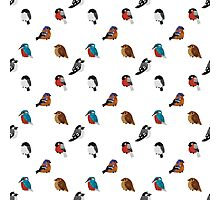 Beautifully Designed Bird Breed Images Photographic Print