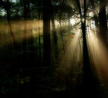 Forest Rays by Marcus Taylor